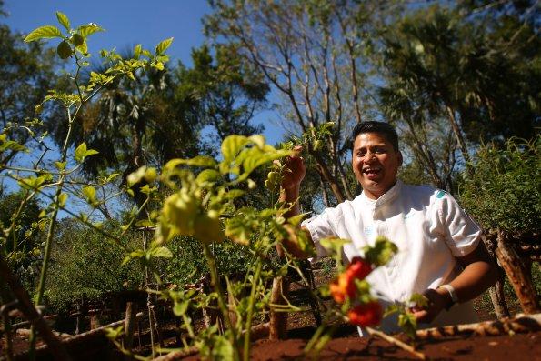 Chef Luis in Garden 2 595x397 - Chablé Resort, Mérida, Yucatán, Mexico.