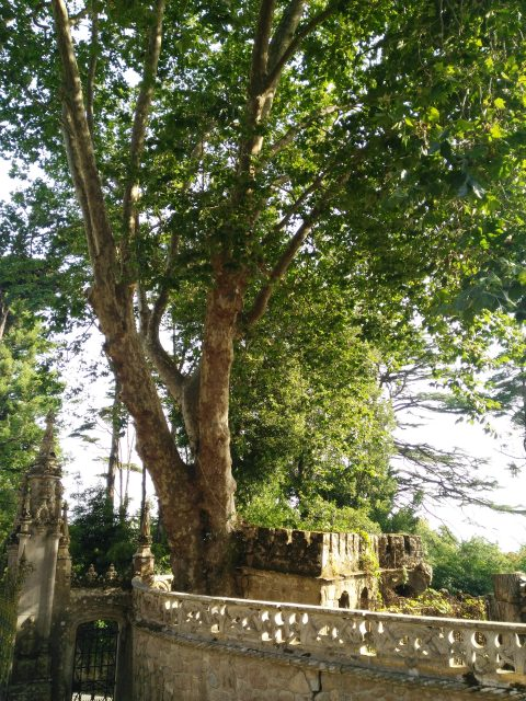 IMG 20180803 093420 480x640 - Treasures of Portugal I: Quinta da Regaleira.