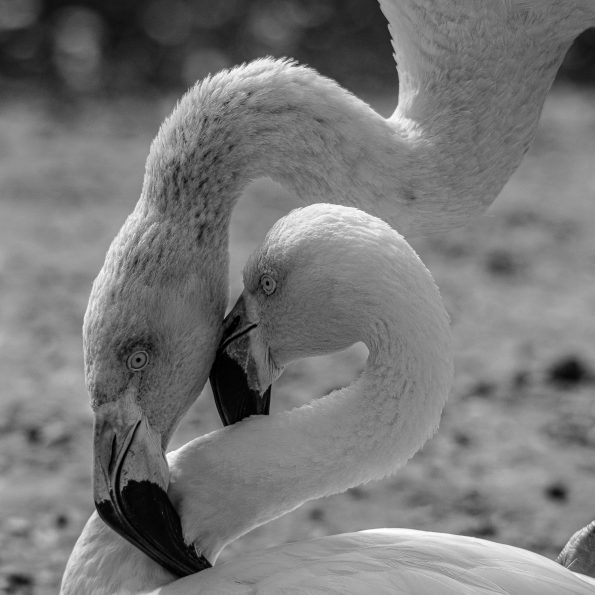entwined 595x595 - Alfie Bowen, the photographer that loves the wild Nature