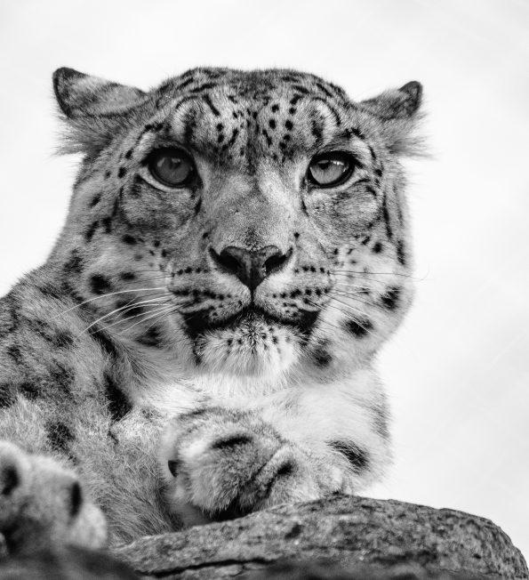 frozen beauty 595x652 - Alfie Bowen, the photographer that loves the wild Nature