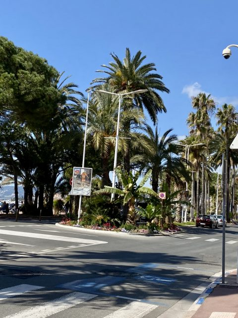 IMG 0746 480x640 - Cannes, the chic and elegant city of the French Riviera