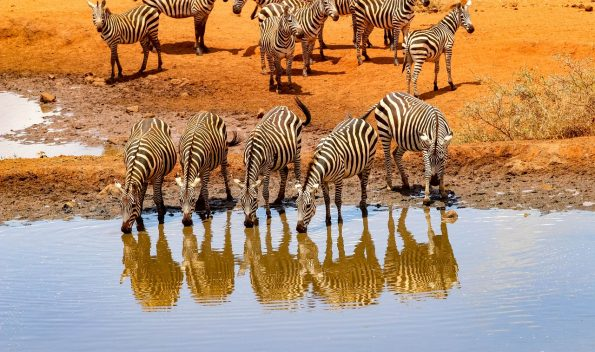 africa 4045663 1280 595x352 - Luxe by Mulanda, the luxury travels to best lodges of Africa part I