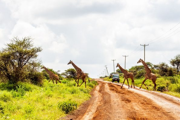 amboseli 4744085 1280 595x397 - Luxe by Mulanda, the luxury travels to best lodges of Africa part I
