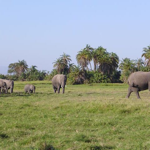amboseli 4967430  480 480x480 - Luxe by Mulanda, the luxury travels to best lodges of Africa part I